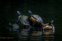Curious Turtles