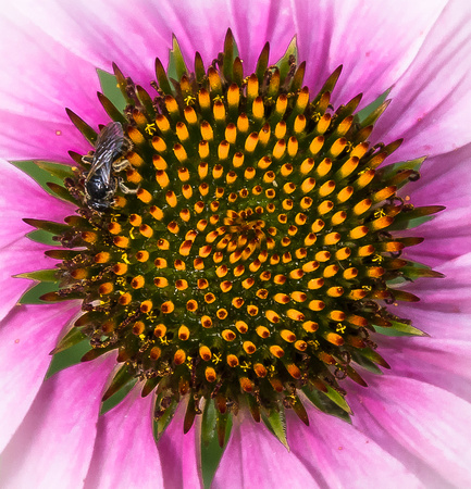 Visitor on a daisy